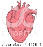 Clipart Graphic Of A Sketched Drawing Styled Human Heart Royalty Free Vector Illustration by patrimonio