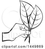 Black And White Hand Holding Leaves
