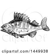 Black And White Sketched Perch Fish