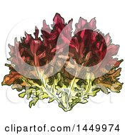 Clipart Graphic Of A Sketched Lollo Rosso Lettuce Royalty Free Vector Illustration by Vector Tradition SM
