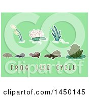 Clipart Graphic Of A Frog Life Cycle From Egg To Adult With Text On Green Royalty Free Vector Illustration