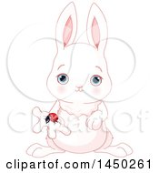 Cute Adorable Baby Animal Bunny Rabbit Holding A Spring Time Ladybug