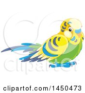 Cute Pet Budgerigar Parakeet Bird