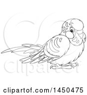 Cartoon Black And White Cute Pet Budgie Parakeet Bird
