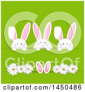 Clipart Graphic Of A Trio Of White Easter Bunny Rabbits Tucked In A Paper Slab With Daisy Flowers On Green Royalty Free Vector Illustration