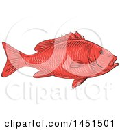 Drawing Sketch Styled Red Australasian Snapper Fish
