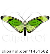 Clipart Graphic Of A Beautiful Green Butterfly Or Moth Royalty Free Vector Illustration by AtStockIllustration