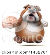 Clipart Of A 3d Bill Bulldog Mascot Holding A Brain On A White Background Royalty Free Illustration