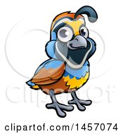 Cartoon California Quail Bird