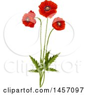 Red Poppy Flowers On Stems