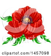 Red Poppy Flower And Leaves Design