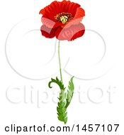 Red Poppy Flower And Stem