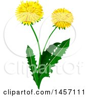 Clipart Of A Dandelion Plant With Flowers Royalty Free Vector Illustration