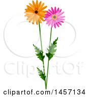 Stem With Pink And Orange Daisy Flowers