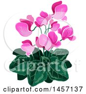 Plant With Pink Flowers