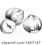 Clipart Of Black And White Sketched Hazelnuts Royalty Free Vector Illustration