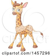 Cute Blue Eyed Baby Giraffe