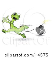 Terrified Green Gecko Running And Trying To Avoid A Bomb That Is Tied To His Tail