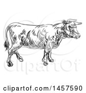 Black And White Sketched Cow In Profile