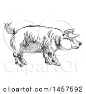 Black And White Sketched Pig In Profile