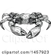 Sketched Black And White Crab