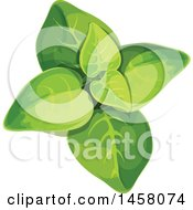 Clipart Of A Marjoram Plant Royalty Free Vector Illustration