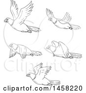 Clipart Of Black And White Flying Bald Eagles In Lineart Style Royalty Free Vector Illustration