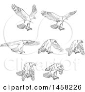 Clipart Of Flying Bald Eagles In Sketched Black And White Style Royalty Free Vector Illustration