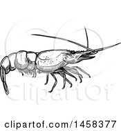 Shrimp In Black And White Sketched Style
