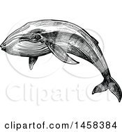 Clipart Of A Whale In Black And White Sketched Style Royalty Free Vector Illustration