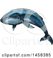 Clipart Of A Whale In Sketched Style Royalty Free Vector Illustration by Vector Tradition SM