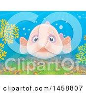 Blobfish Underwater