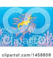 Leafy Seadragon Underwater