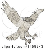 Flying Harpy Eagle In Sketched Drawing Style
