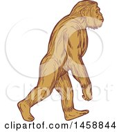 Clipart Of A Homo Habilis Walking Upright In Sketched Drawing Style Royalty Free Vector Illustration by patrimonio