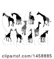 Black Silhouetted Giraffes