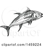 Clipart Of A Sketched Tuna Fish In Black And White Royalty Free Vector Illustration