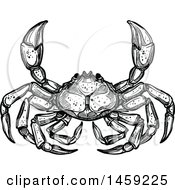 Sketched Crab In Black And White