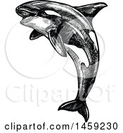 Clipart Of A Sketched Orca Killer Whale In Black And White Royalty Free Vector Illustration