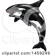 Clipart Of A Sketched Orca Killer Whale Royalty Free Vector Illustration