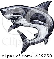 Clipart Of A Sketched Shark Royalty Free Vector Illustration