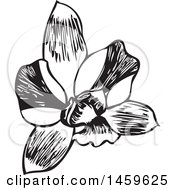 Clipart Of A Sketched Orchid Flower Design Royalty Free Vector Illustration