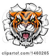 Tiger Mascot Head Breaking Through A Wall