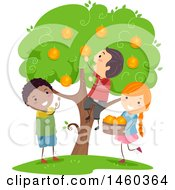Group Of Children Picking Oranges From A Tree