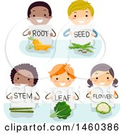 Clipart Of A Group Of Children Showing And Holding Signs On Root Seed Stem Leaf And Flower Royalty Free Vector Illustration