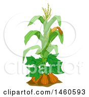 Clipart Of A Corn Plant With Gourds And Beans Royalty Free Vector Illustration by BNP Design Studio
