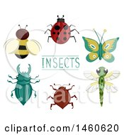 Different Insects Like Bee Lady Bug Butterfly Dragonfly Ground Beetle And Stag Beetle