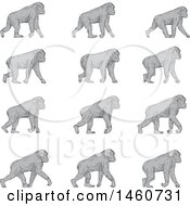 Clipart Of A Set Of A Chimpanzee Walking In Sketched Drawing Style Royalty Free Vector Illustration