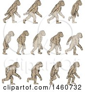 Clipart Of A Set Of Homo Habilis Walking In Motion In Sketched Drawing Style Royalty Free Vector Illustration