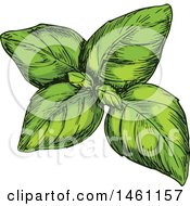 Clipart Of Sketched Green Basil Royalty Free Vector Illustration
